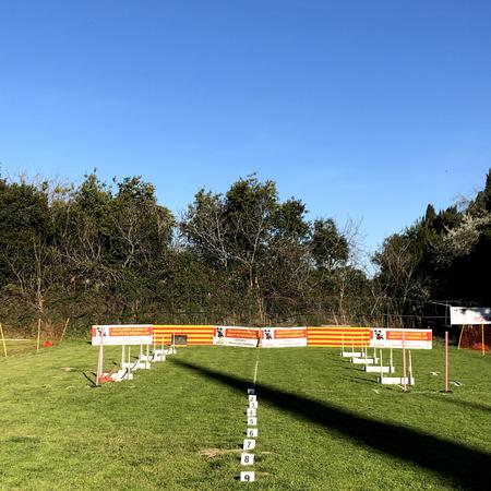 flyball-2019