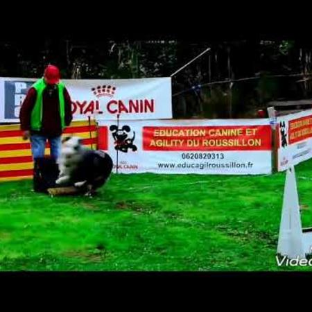 video_du_concours_flyball